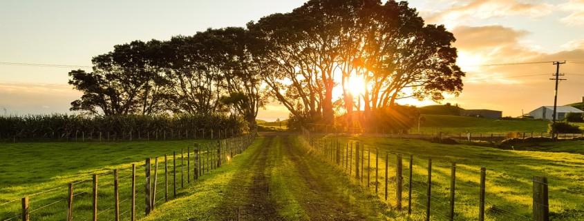 Sentiero di campagna con sullo sfondo il sole