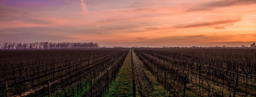 Un tramonto sulle vigne